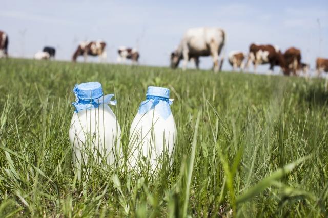 牛乳は健康に悪い!?子供に飲ませるはやめて