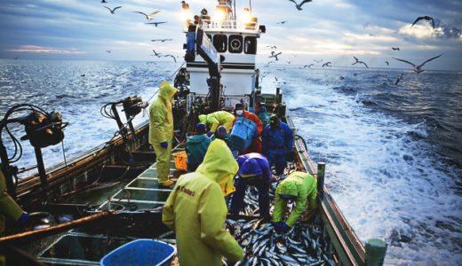 やっぱり天然魚がいいの?養殖魚の危険性は?両者デメリットがあります