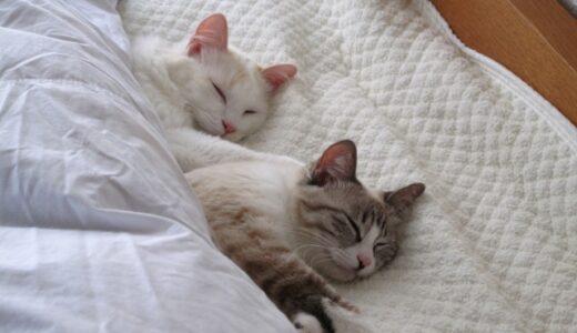 二度寝に効果はあるのか?二度寝をしない方法とかあるの?
